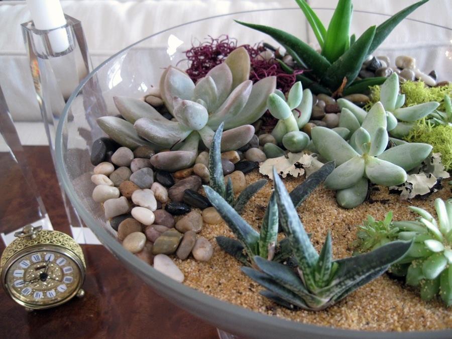Succulents in Decor – Voted Top Interior Designer Sarasota ...